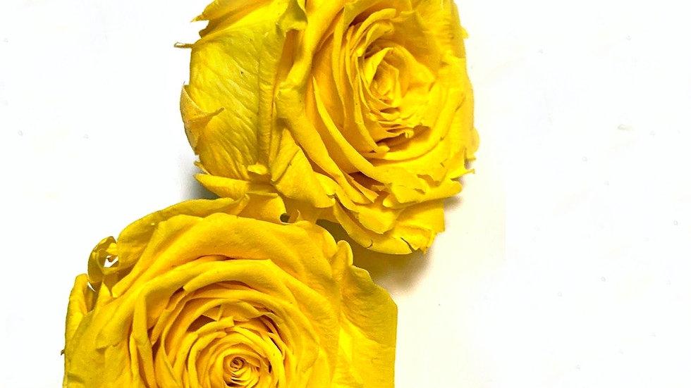 Стабилизированная роза Желтая