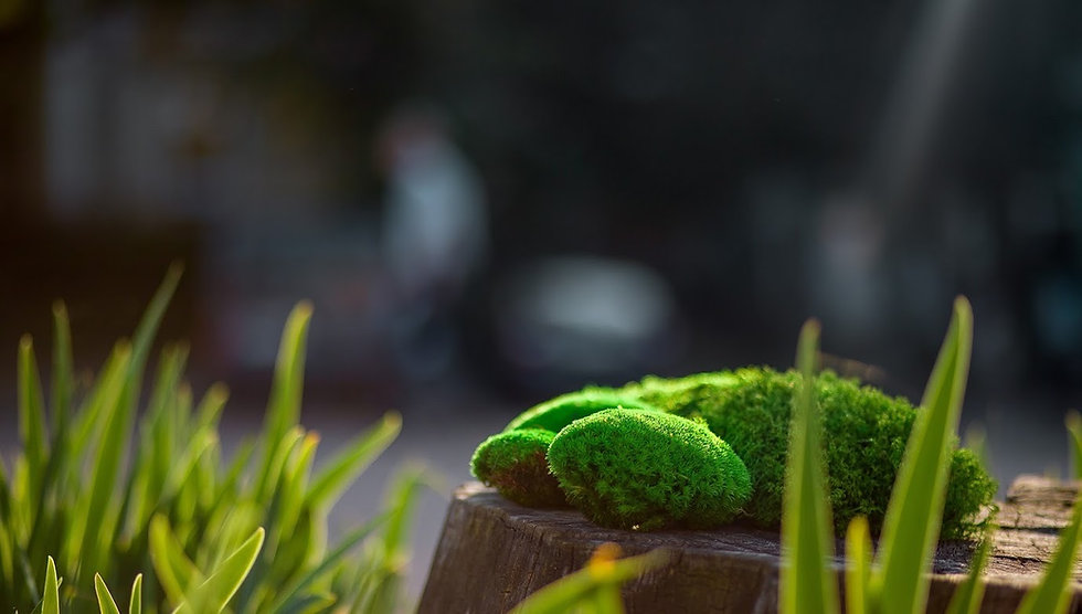 природный мох на пеньке