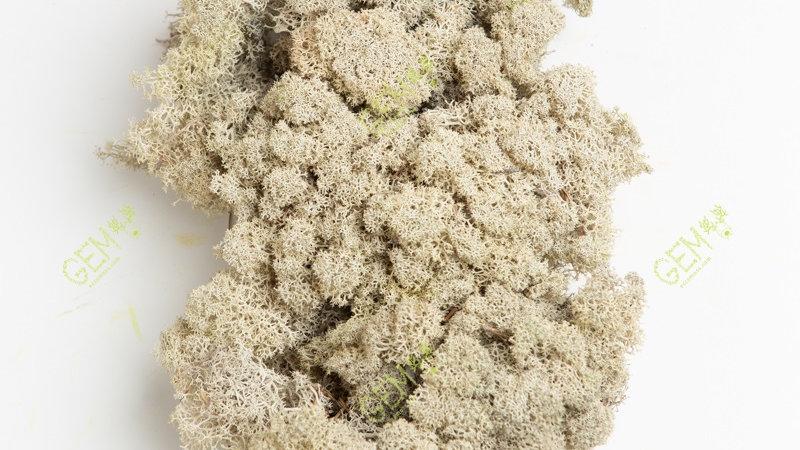 Норвежский мох ягель Грин Екко Мосс белый