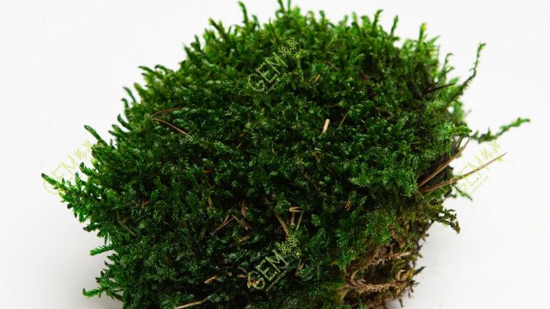 Мох прованс Green Ecco Moss темно-зеленый