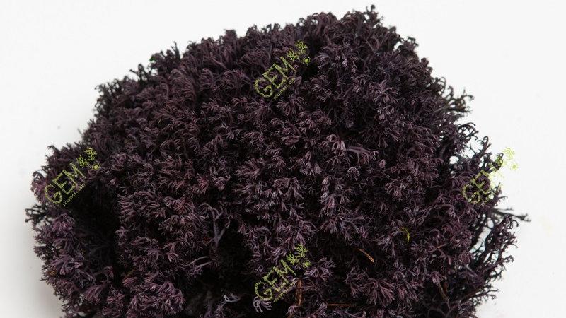 Ягель украинский Green Ecco Moss темно-фиолетовый