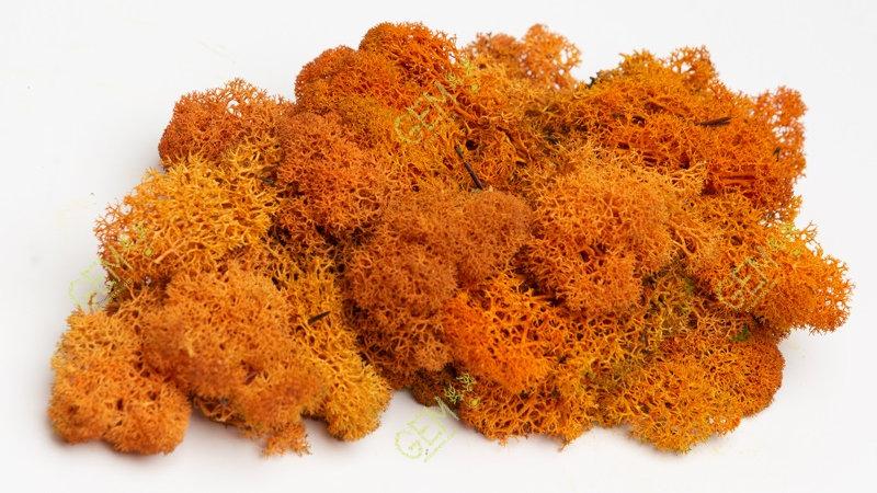 Норвежский мох ягель Грин Екко Мосс оранжевый