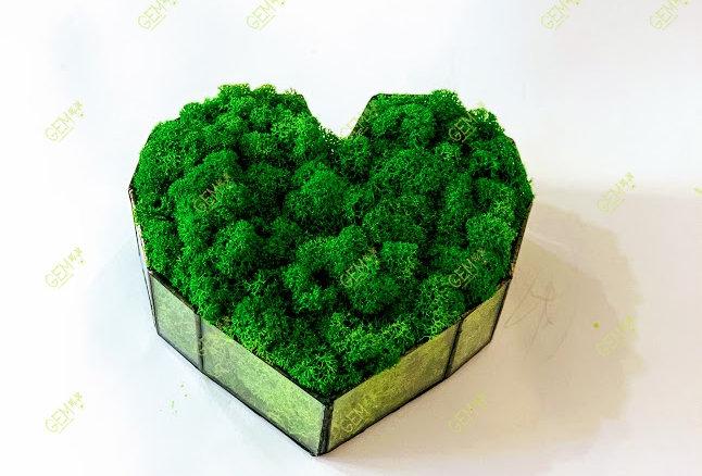 Флорариум со мхом ягель темно-зеленый Green Ecco Moss
