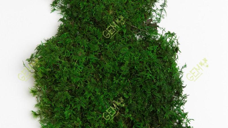 Папоротниковый мох Green Ecco Moss ярко-зеленый