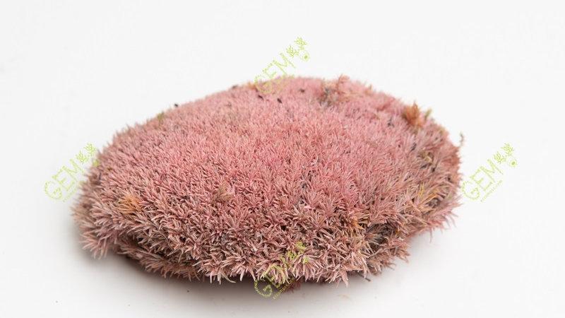 Кочка стабилизированная розовая