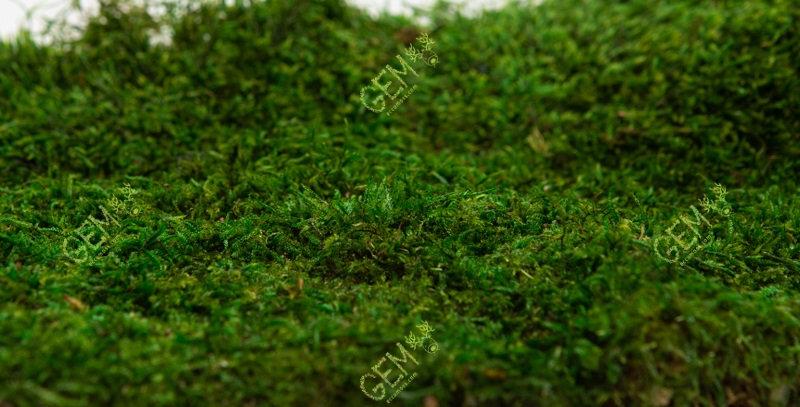 Плоский мох стабилизированный Грин Еко Мос зеленый 1 м.кв.