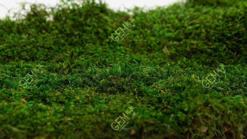 Плоский мох стабилизированный Грин Еко Мос зеленый
