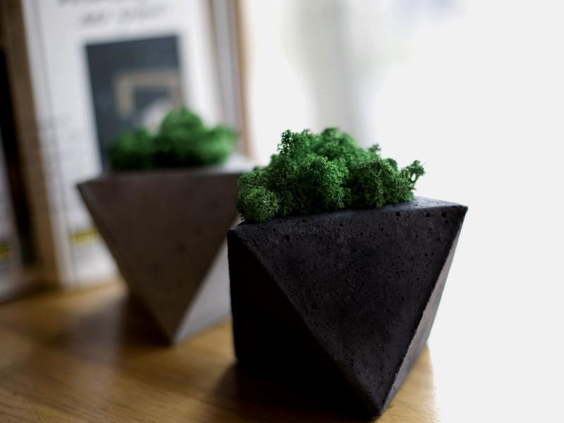 стабилизированный мох в горшке купить киев