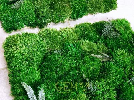Почему искусственный мох хуже, чем стабилизированный?
