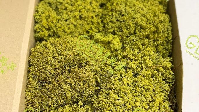 Ягель украинский Green Ecco Moss лимонно-желтый
