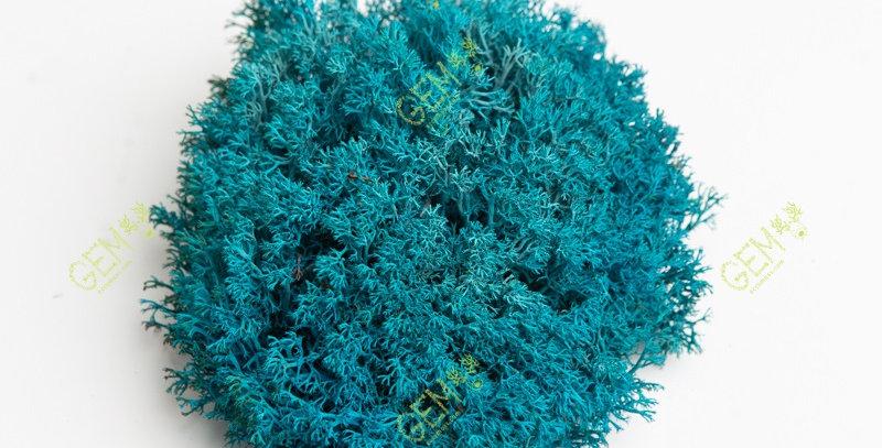 Ягель украинский Green Ecco Moss голубой