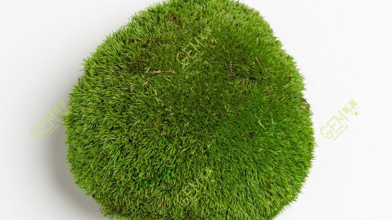 Кочка стабилизированная Green Ecco Moss натурально-зеленая