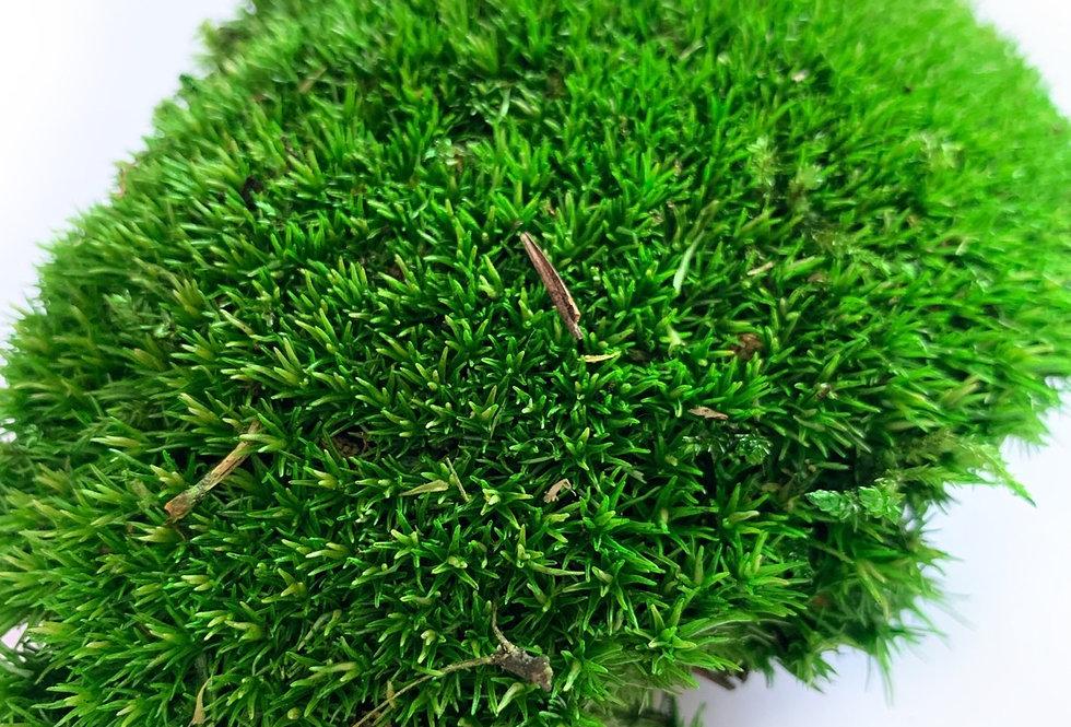 Кочка стабилизированная зеленая