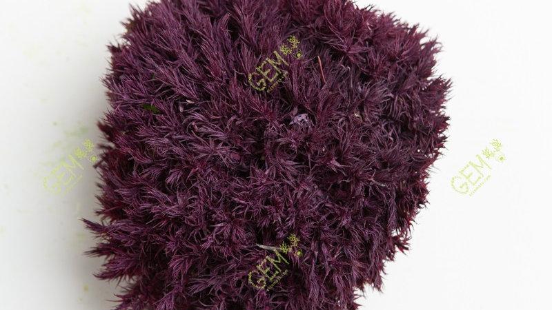 Прованс мох королевский Green Ecco Moss пурпурный