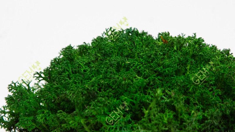 Ягель украинский GEM темно-зеленый