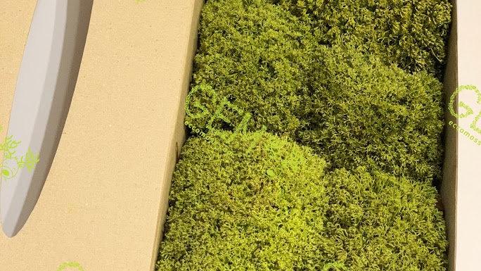 Ягель украинский Green Ecco Moss лайм