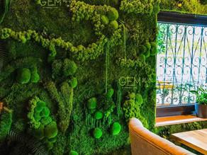 Искусство из стабилизированных растений и мха