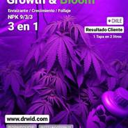 growth1.jpg