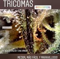 tricomas 1.jpg