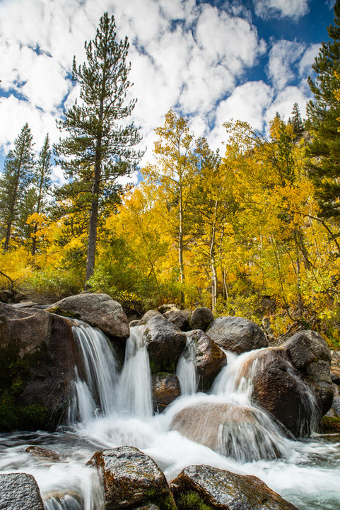 Bishop Creek Cascade with Fall Color