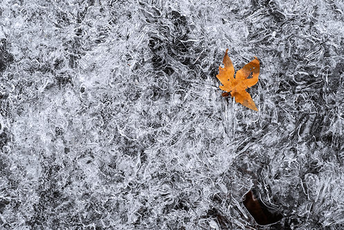 Falling into Winter (Signed image)