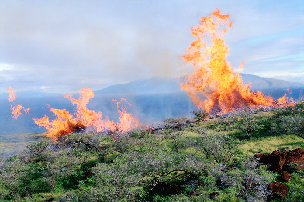 Maui has become increasingly fire-prone thanks to climate change. (Photo credit: JupiterImages)