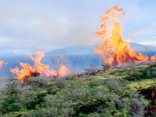 Hawaii's Maui County Takes Big Oil to Court Over Climate Crisis