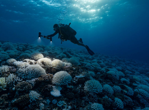 Research: 20 Carbon Majors Responsible for More Than 20 Percent of Ocean Acidification