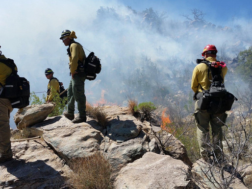 As Climate Change Burns Arizona, State Has More Imprisoned Firefighters Than Employees