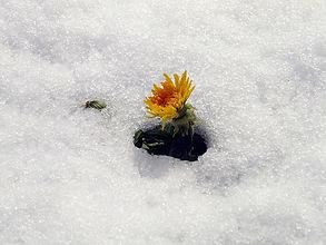 Schnee_1_klein.jpg