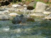 Wasser_2_klein.jpg