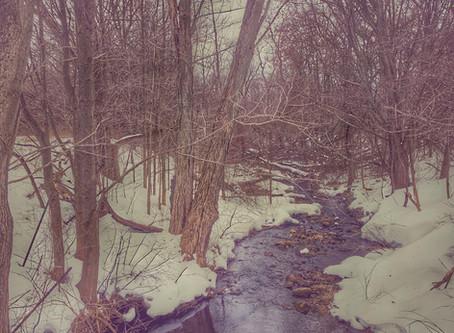 Winter-Ending Walk