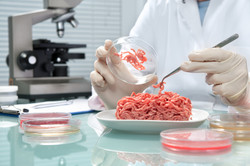 Food quality control expert inspecting at meat specimen in the laboratory.jpg