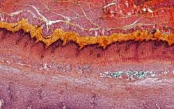 ALTHISIA movat pentachrome 1