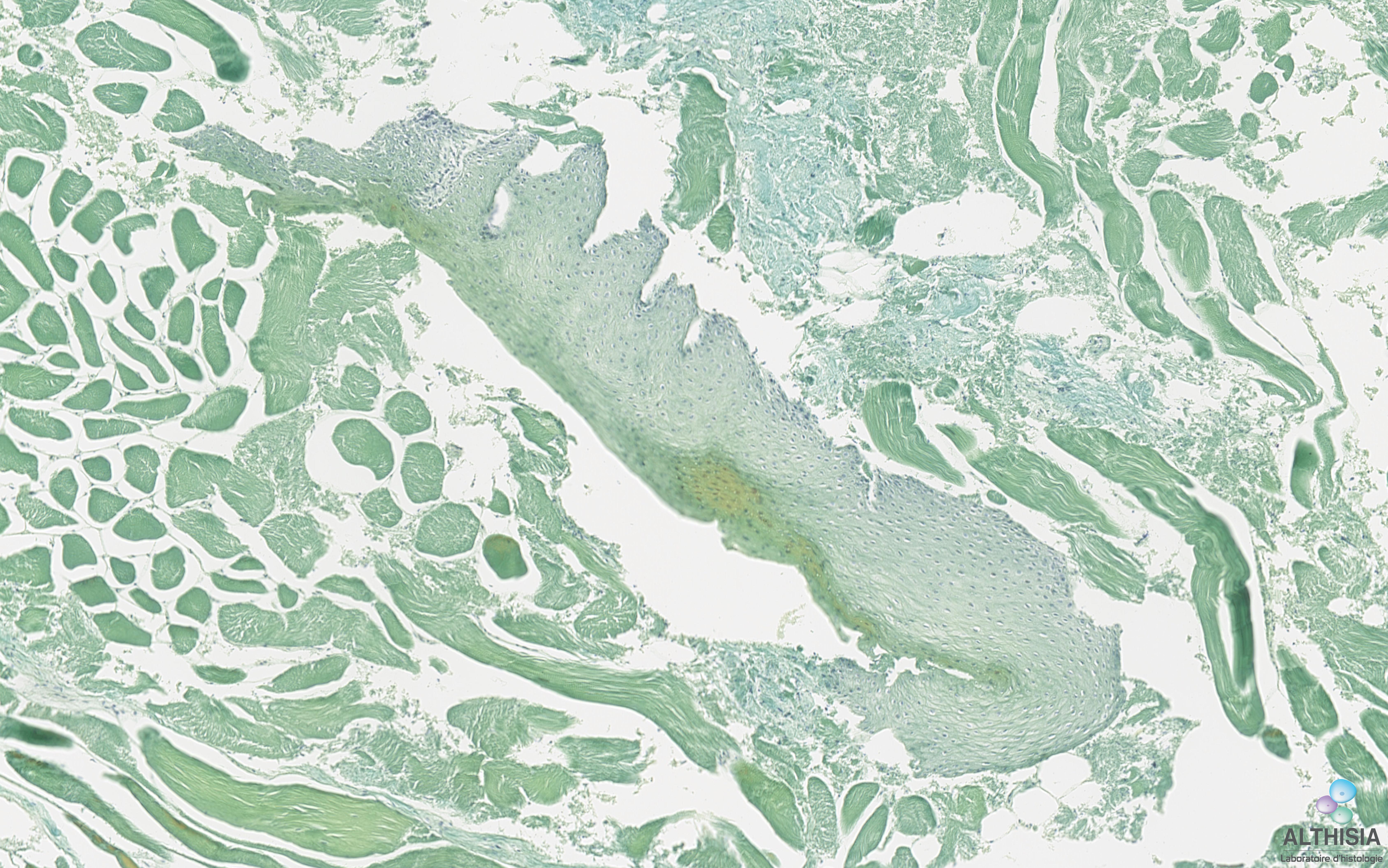 image histologie de composition