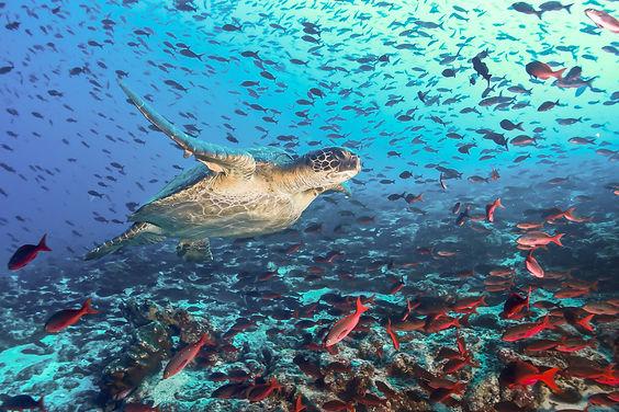 Tauchen-in-Aegypten jellyfish-in red-sea