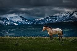 Near Glacier National Park