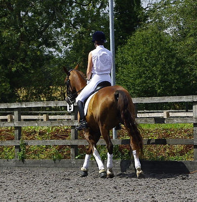 Dressage Horse Orchard Reflexology Bedford