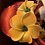 Thumbnail: Aulani Burgundy Plumeria Ears