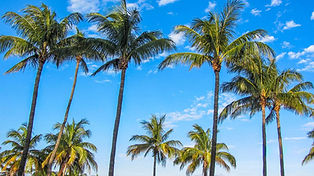 Palm Trees Blue Sky image.jpg