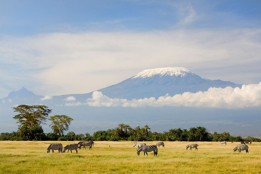zebras-kilimanjaro-africa.jpg