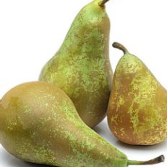 Pears - Conference Pears