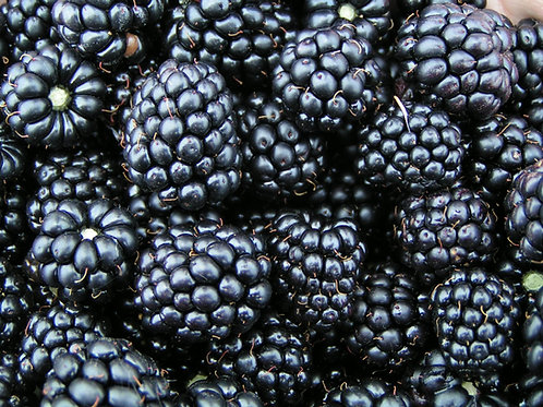 Blackberries - 125gm punnet