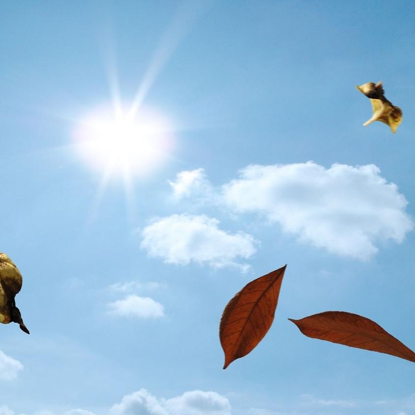 """""""Los vientos de la vida"""" (Associació Evolucion)"""
