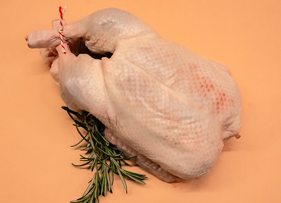 Duck (whole)