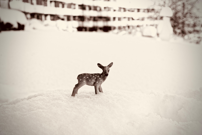 Wild Life Deer