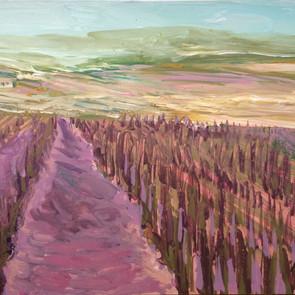 Pink Vineyards