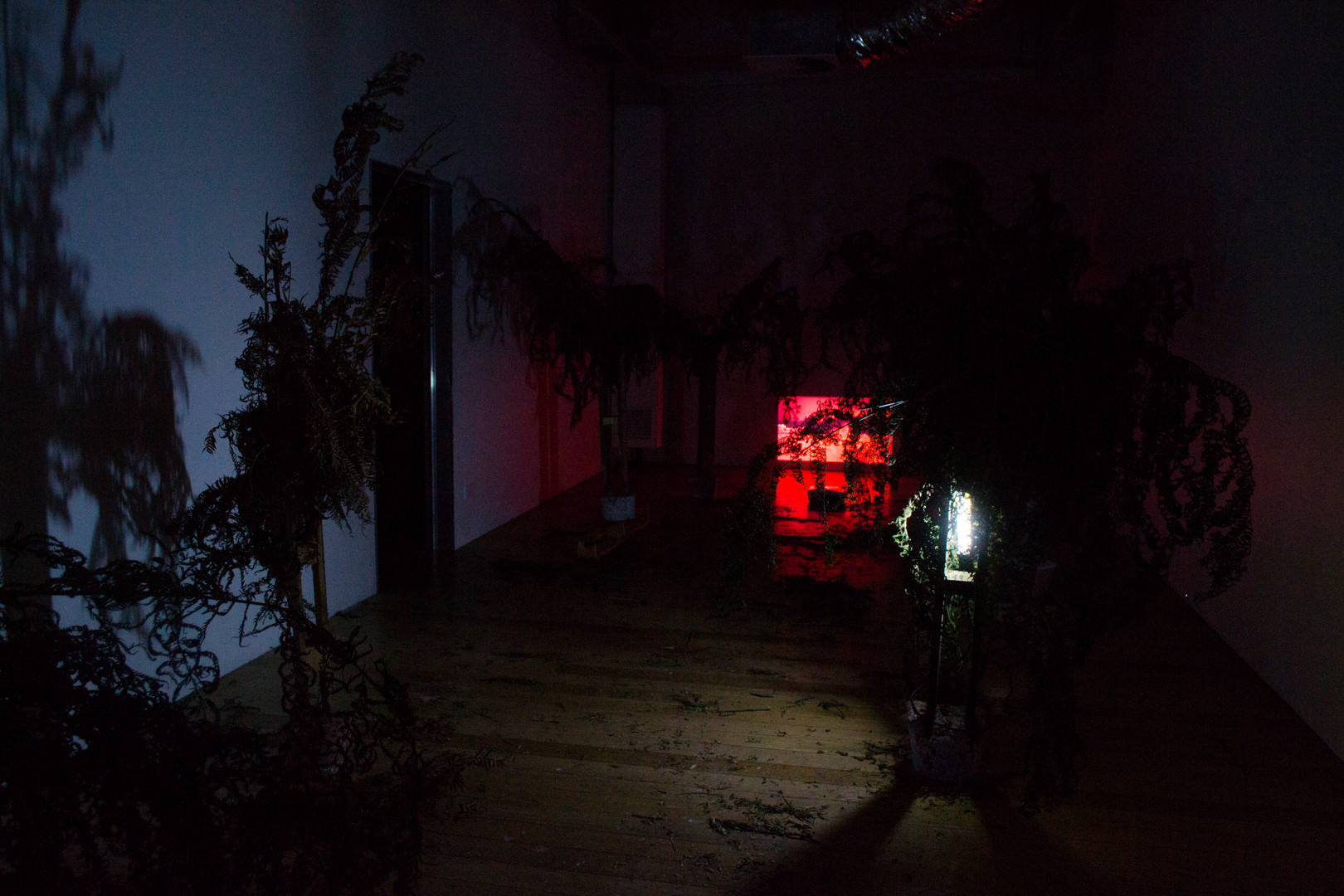 Nuclear Deforestation I, 2019 (Install view)