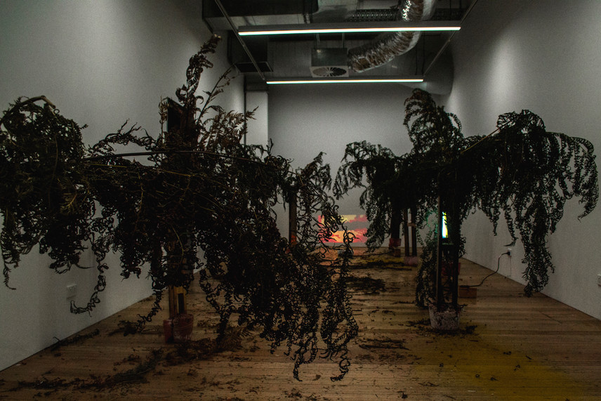 Trees No. 1,000,000,000,002 - 009, 2019 (install view)