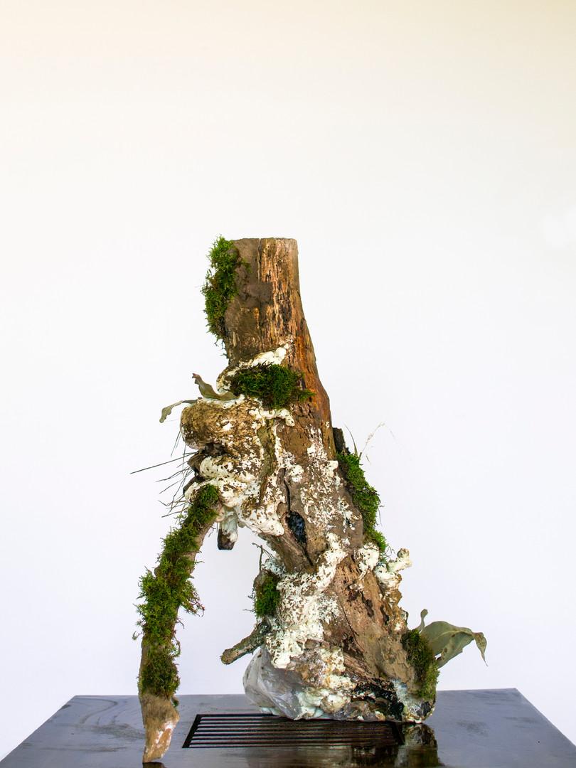 Preserved Limb No. 004, 2020